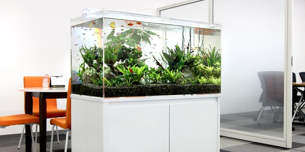 水槽レンタル オフィス 淡水魚水槽