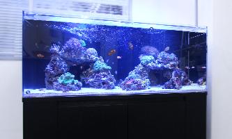 120cm海水魚水槽 レンタル