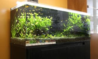 120cm淡水魚水槽 レンタル