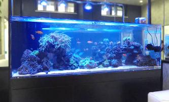 150cm海水魚水槽 レンタル