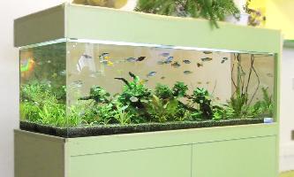 150cm淡水魚水槽 レンタル