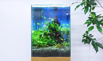 30cm淡水魚水槽 レンタル