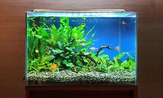 45cm淡水魚水槽 レンタル