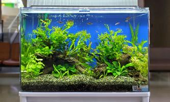 60cm淡水魚水槽 レンタル