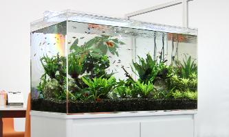 90cm淡水魚水槽 レンタル