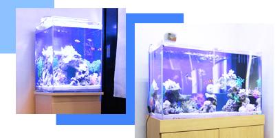 45cm海水魚水槽レンタル・水槽リースの料金
