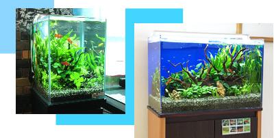 150cm淡水魚水槽レンタル・水槽リースの料金