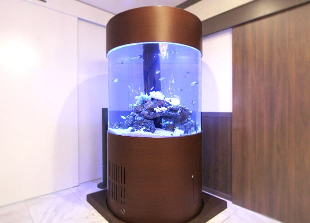 東京アクアガーデン レンタル水槽 円柱水槽