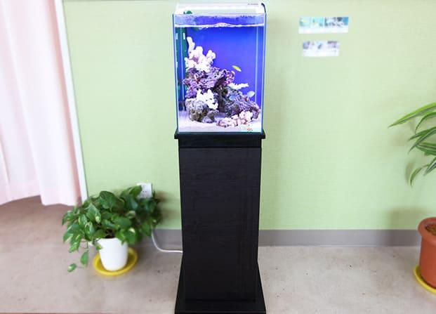 東京アクアガーデン レンタル水槽 30cm海水魚アクアリウム水槽