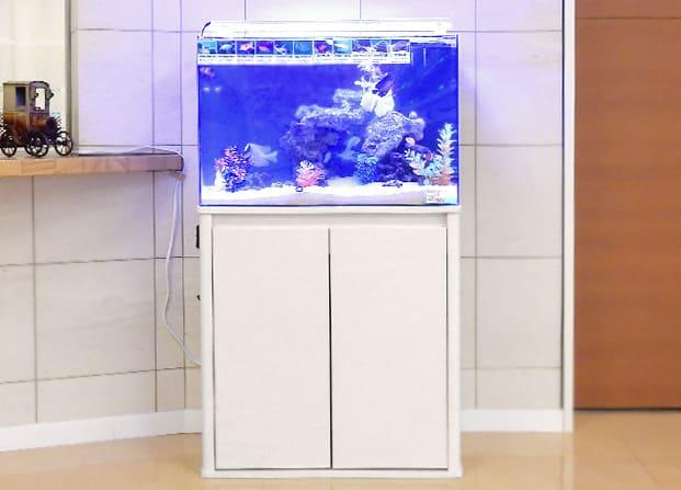 東京アクアガーデン レンタル水槽 60cm海水魚アクアリウム水槽