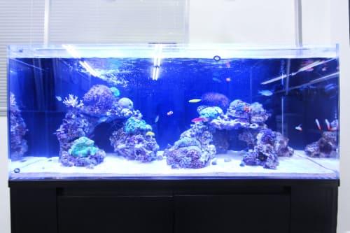 120cm海水魚水槽のポイント1