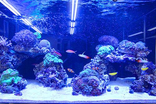 120cm海水魚水槽のポイント2