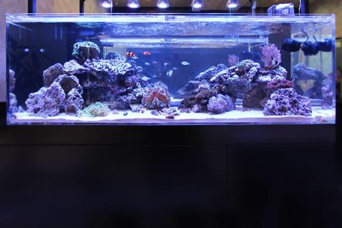 150cm海水魚水槽のポイント1