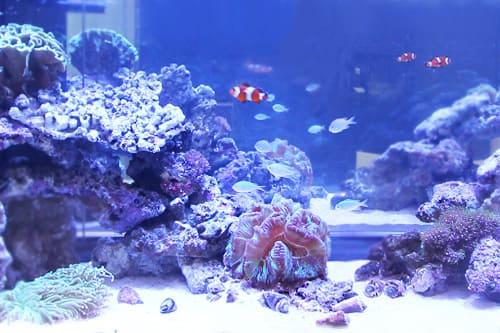 150cm海水魚水槽のポイント2