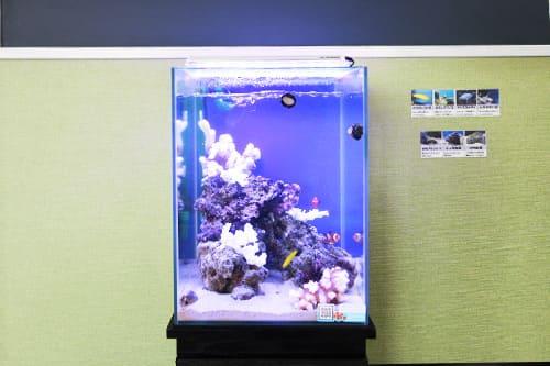 30cm海水魚水槽のポイント1