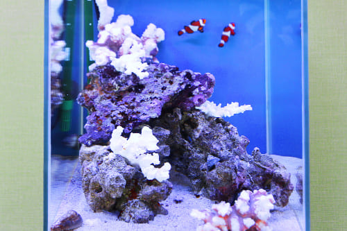 30cm海水魚水槽のポイント2