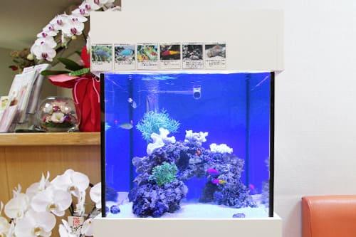 45cm海水魚水槽のポイント1
