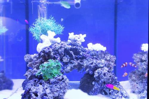 45cm海水魚水槽のポイント2