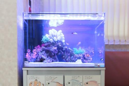 60cm海水魚水槽のポイント1
