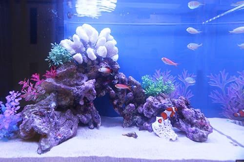 60cm海水魚水槽のポイント2
