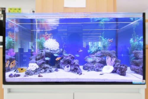 90cm海水魚水槽のポイント1
