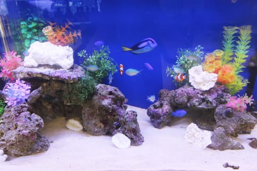 90cm海水魚水槽のポイント2