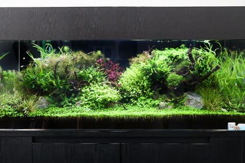 120cm淡水魚水槽のポイント1