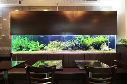 150cm淡水魚水槽のポイント1