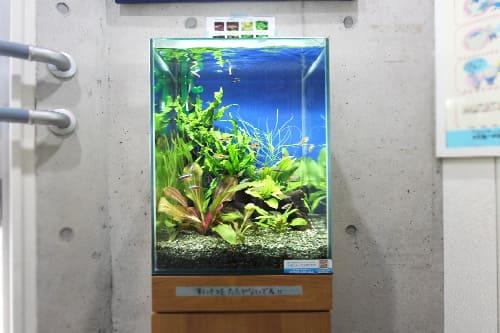30cm淡水魚水槽のポイント1