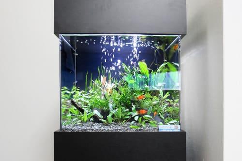 45cm淡水魚水槽のポイント1