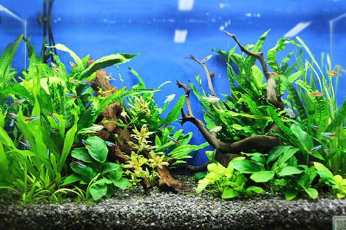 60cm淡水魚水槽のポイント2