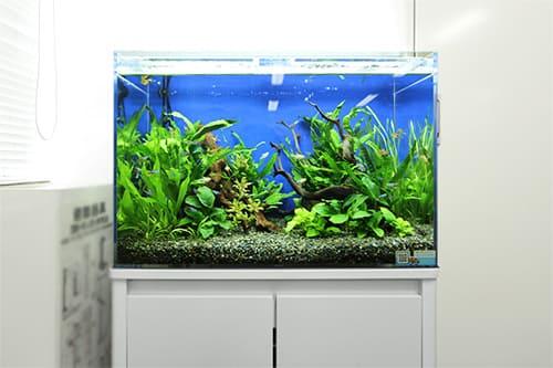 60cm淡水魚水槽のポイント1