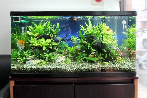 90cm淡水魚水槽のポイント1