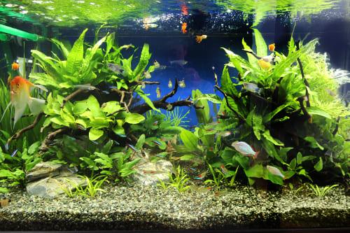 90cm淡水魚水槽のポイント2