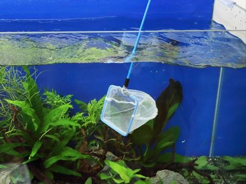 水槽レンタル Q&A 魚が死ぬ