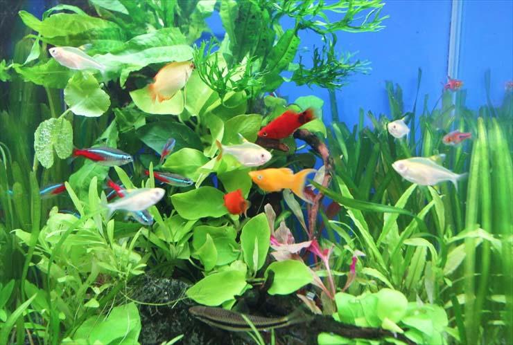 お試し水槽レンタル 熱帯魚 水草