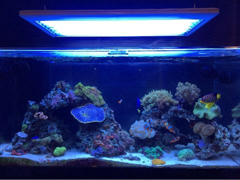 水槽レンタル Q&A 照明点灯時間