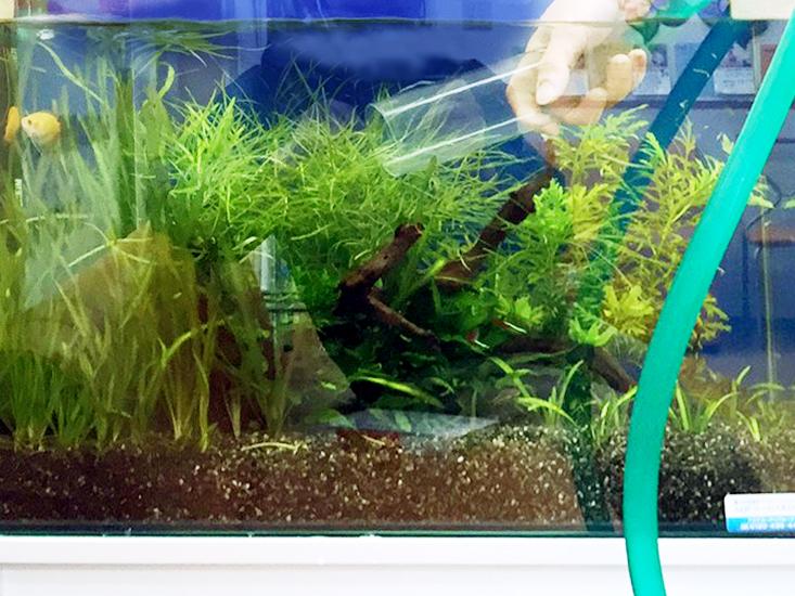 水槽レンタル Q&A メンテナンス 熱帯魚