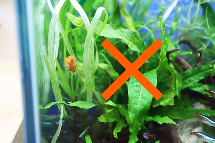 水槽レンタル Q&A 熱帯魚 追加