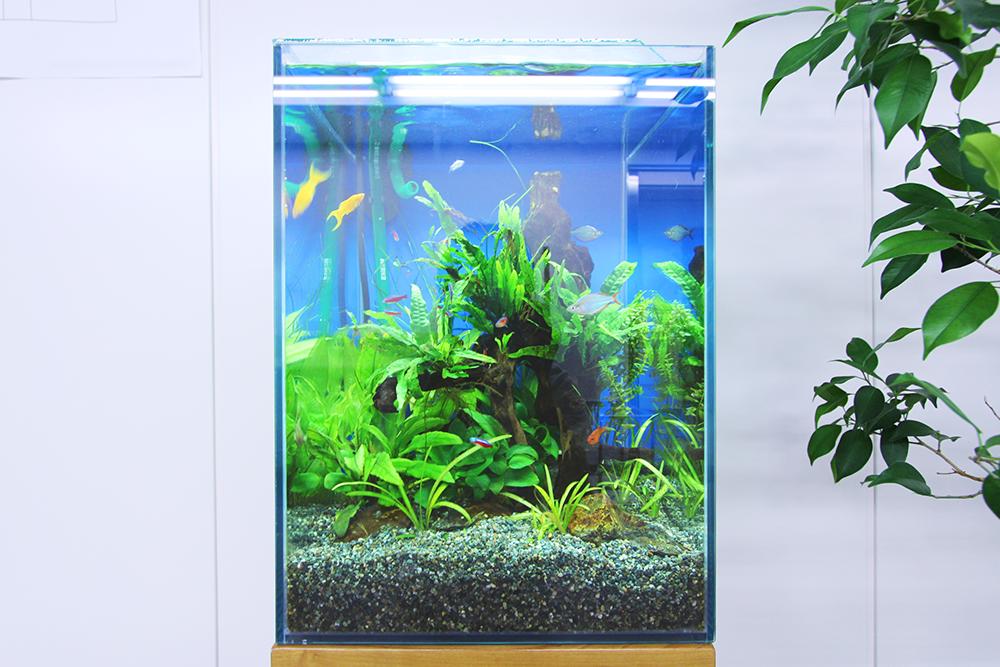 お試し水槽レンタル 熱帯魚