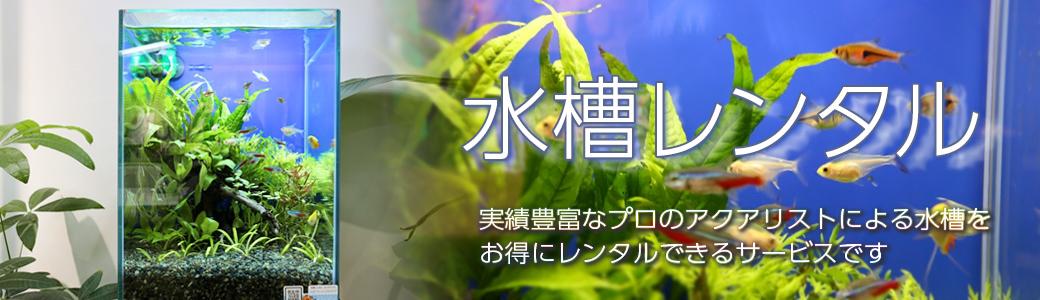 水槽レンタル、水槽リースサービスなら東京アクアガーデン!定期メンテナンスサービス付きのお得な月額性レンタルサービスです。