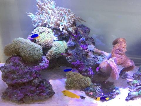 水槽レンタル Q&A 魚を増やす