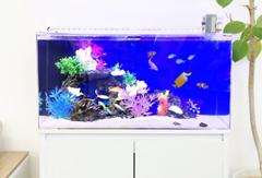 海水魚水槽のレンタルは東京アクアガーデン