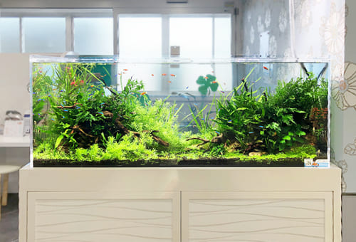 淡水魚水槽のレンタルは東京アクアガーデン