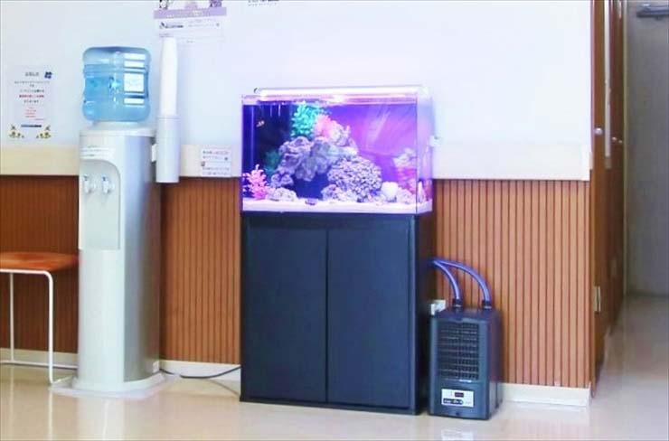 専門科クリニック 水槽レンタル 水槽設置事例5