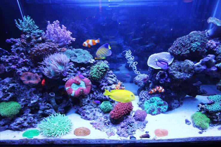 自宅 個人宅 海水魚水槽