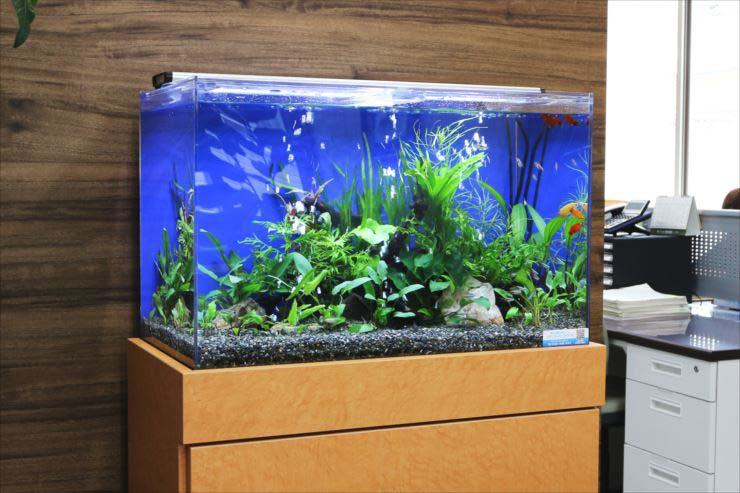 オフィス 企業 水槽レンタル イメージアップ