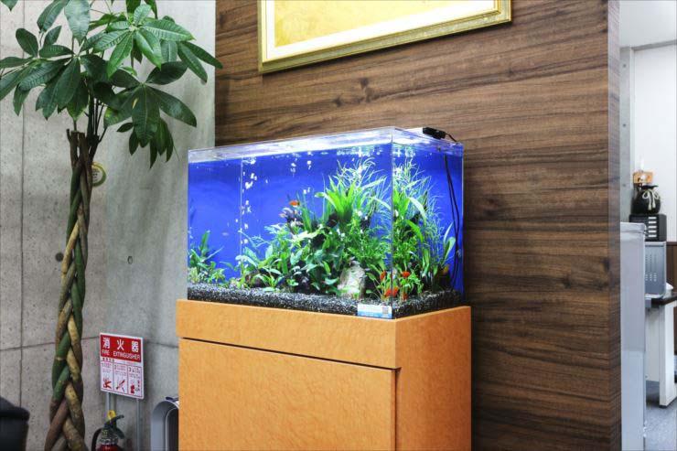 熱帯魚水槽 レンタル