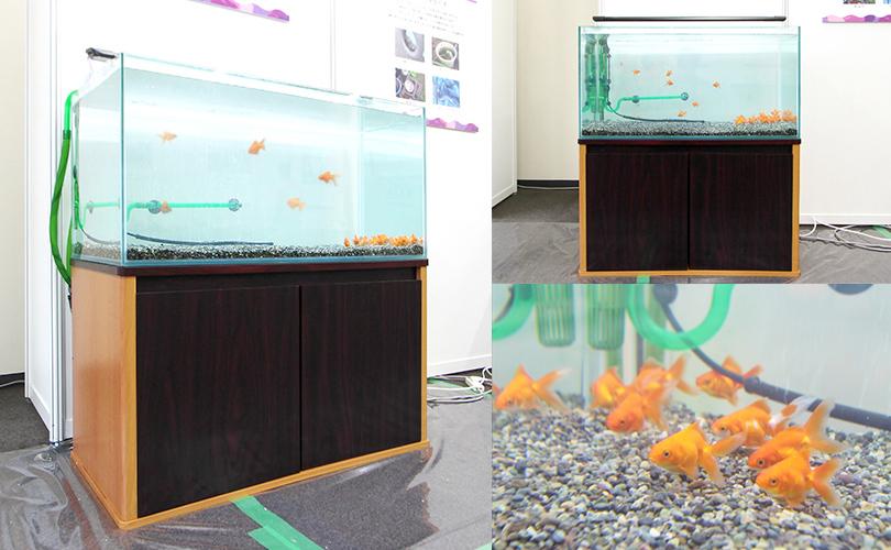 科学博物館に設置した水槽