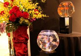 展示会イベントに設置した金魚水槽